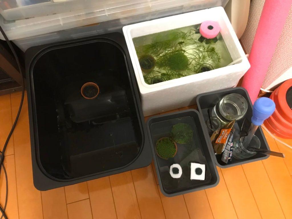 発砲スチロールと黒のプラスチックの水槽