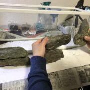 水槽レイアウトの自然石