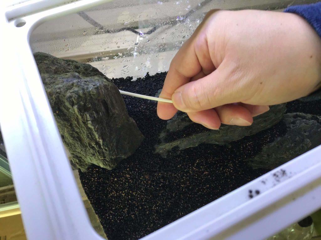 アルコールを含ませた綿棒で石を拭く