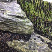 水槽内の石と水草