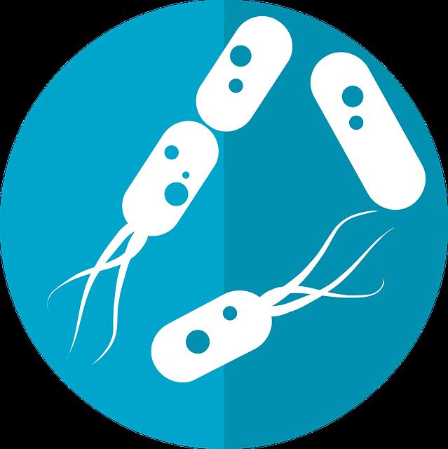 バクテリアのイラスト
