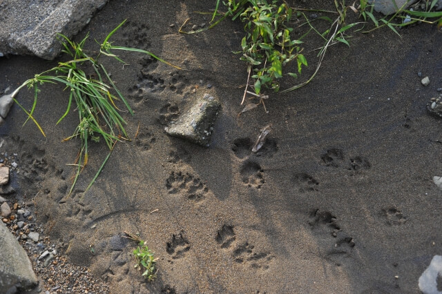 小動物の足跡