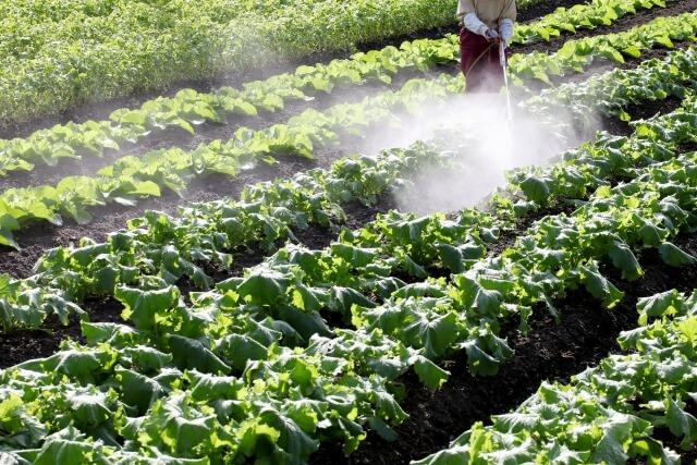 畑への農薬散布