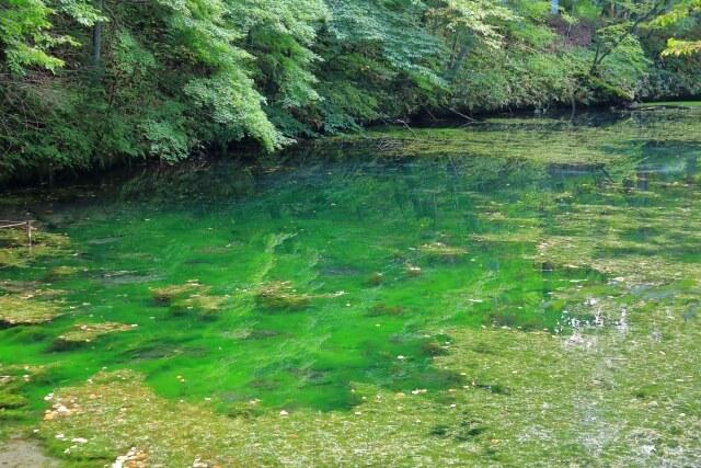 水草の生えた池