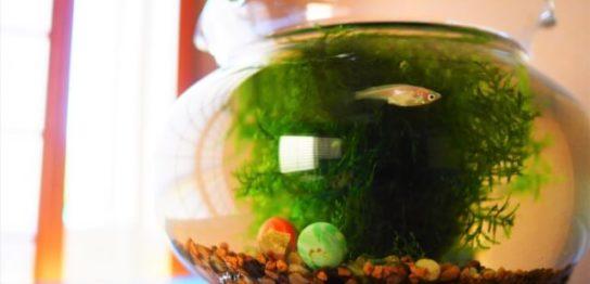 金魚鉢に入ったメダカ