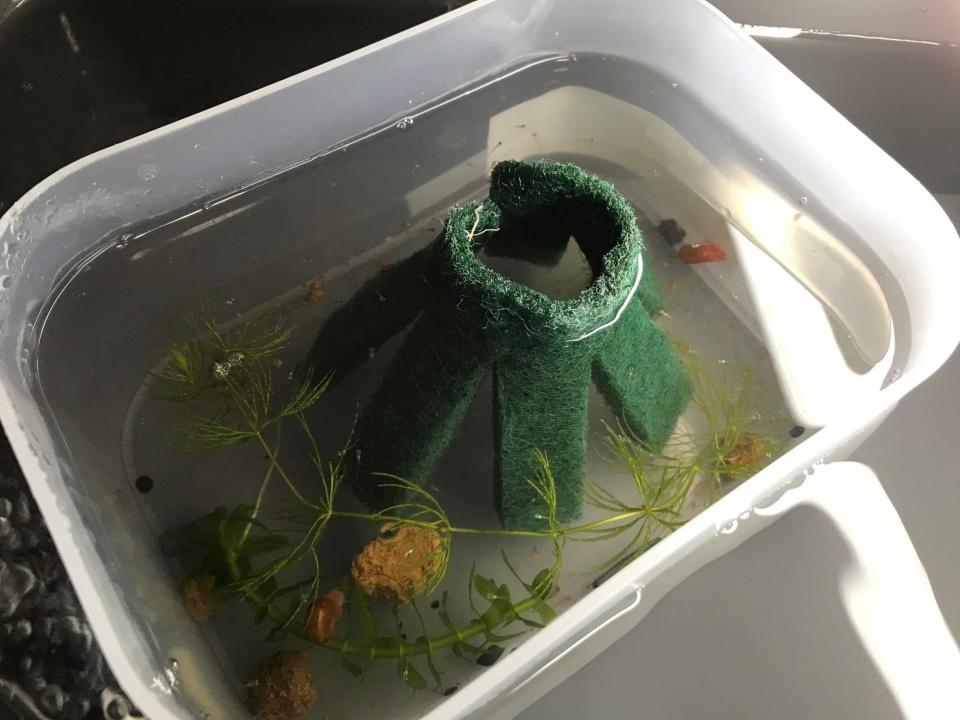 稚魚の飼育容器