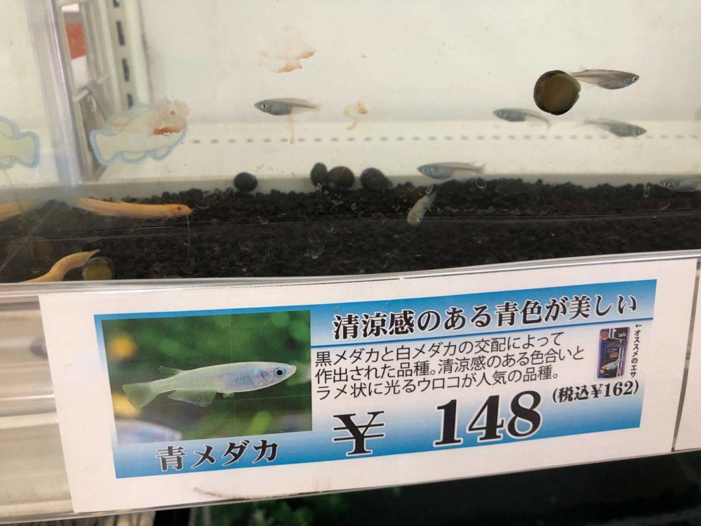 青メダカ148円